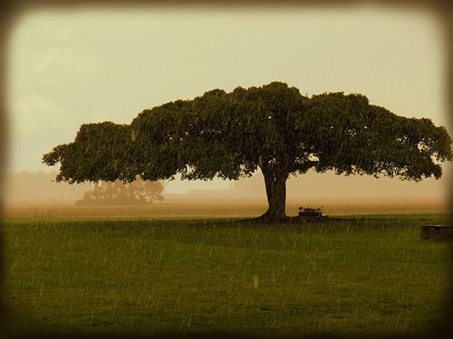 trees nature rain misty fog landscape explore 400 chapeau gbr themoulinrouge justimagine seeninexplore theunforgettablepictures empyreanelite itala2007 landscapedreams treesdiestandingup qualitypixels overtheshot magicdonkeysbest obq contestlifeasiseeit daarklands magicunicornverybest imagofabulae
