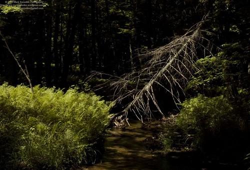 Pool of Sunlight and Broken Woods