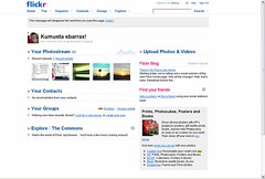 flickr new home page