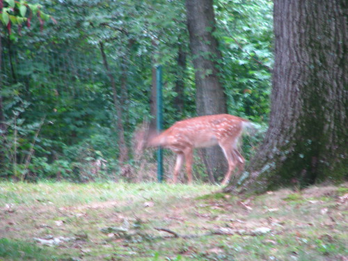 Headless Deer - 20080912-4