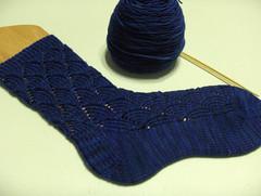 Pomatomus sock #1