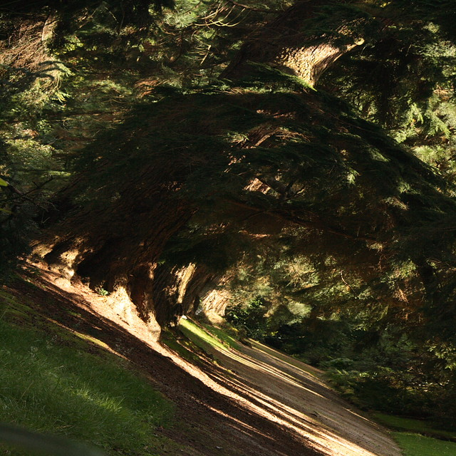 Path in a Woodland Glade