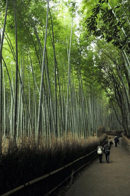 Sagano Bamboo Grove 嵯峨野竹林