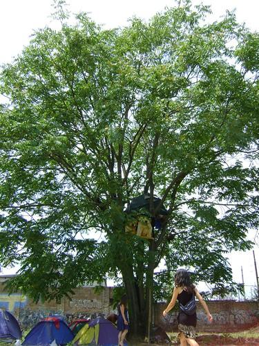 ciemmona 2008 campeggio albero tenda