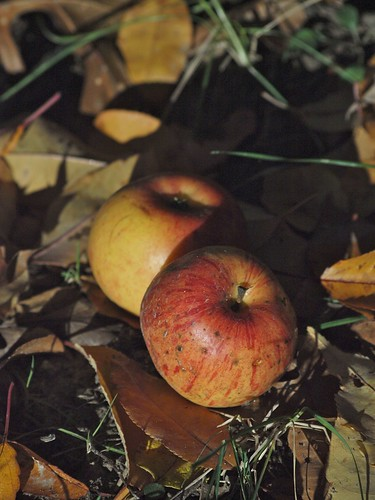 A is for Apples, Fallen on the Ground