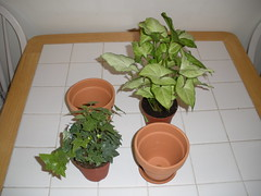 My New Plants