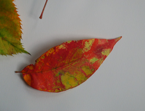 photo - paint stained leaf