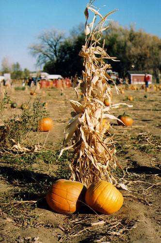 Boulder, pumpkins, film.