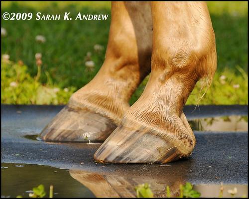 JR's front hooves