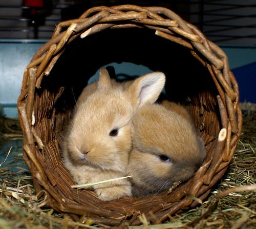 Precious couple