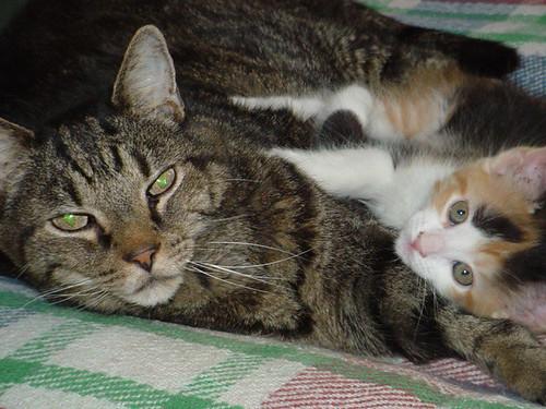 Gar&BabyBlossom3.jpg