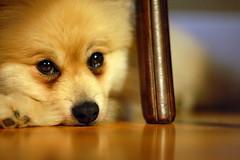 Truffle in his hiding spot