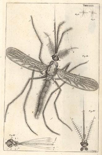 squid from Bible der Natur by Jan Swammerdam