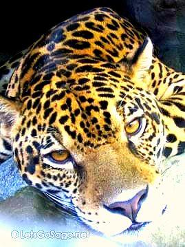 07. Avilon Zoo