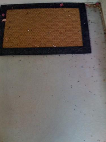 More dead bugs!