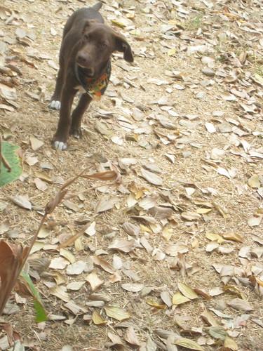 Hazel in her Halloween bandana