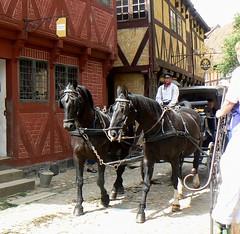 Arhus, Horse & Carriage