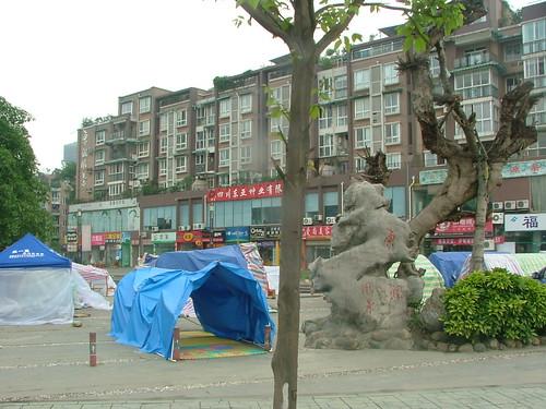 Tree & Shelter