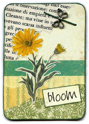 Bloom 1/3