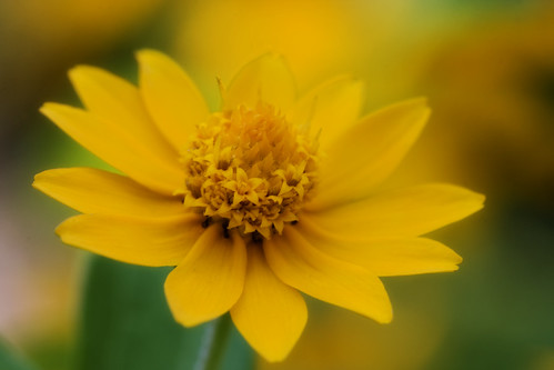 The Tiny Yellow Flower