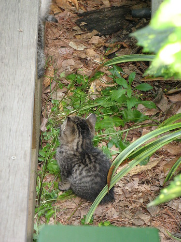 There were a litter of kittens living under the Cafe's deck