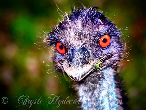 :: in the eyes :: (by ArtByChrysti)