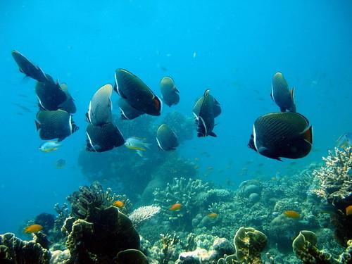 Coral Life, Andaman nicobar