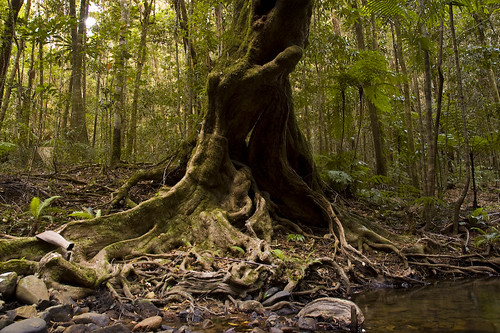 upland rainforest: threatened by global warming