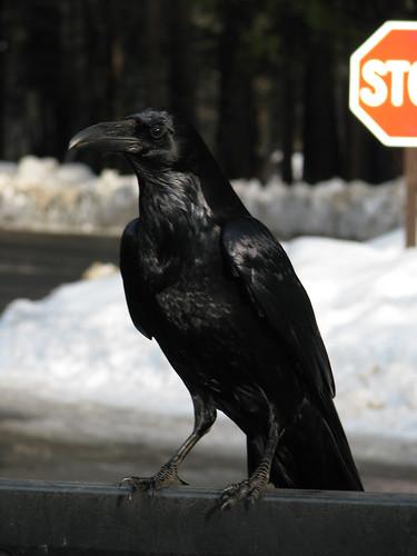 Day 06 - Raven