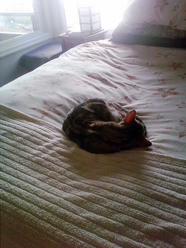 Odin finally naps