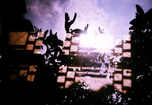 [shanghai]樹影與窗影