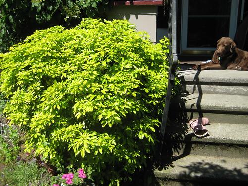 memorial bush