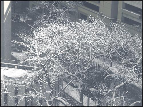 Tree Top Snow