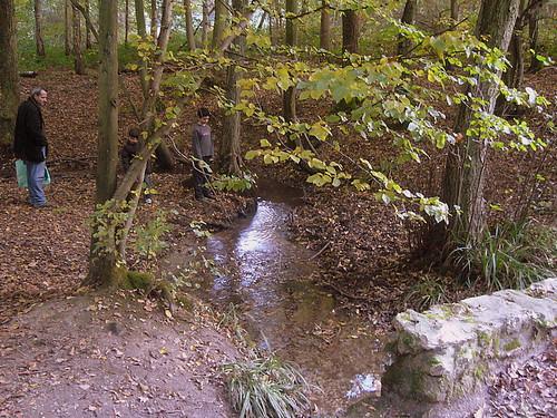 Ruscello nel bosco