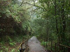 Madeira April 2008