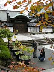 Lotus plants at Kencho-ji, Kamakura