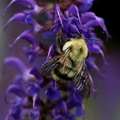 buccaneers of buzz ...