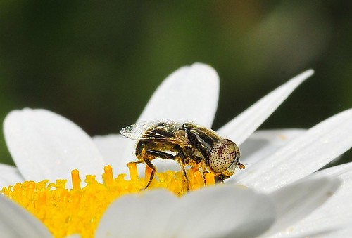tighter on the bee