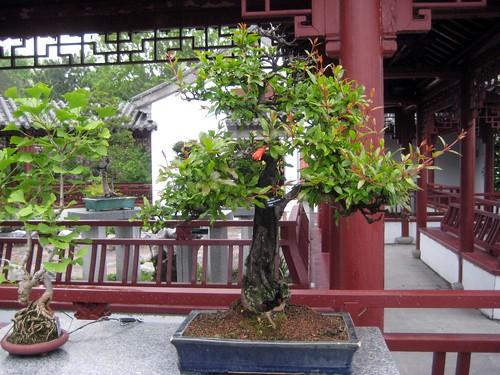 Penjing Garden, Chinese Garden