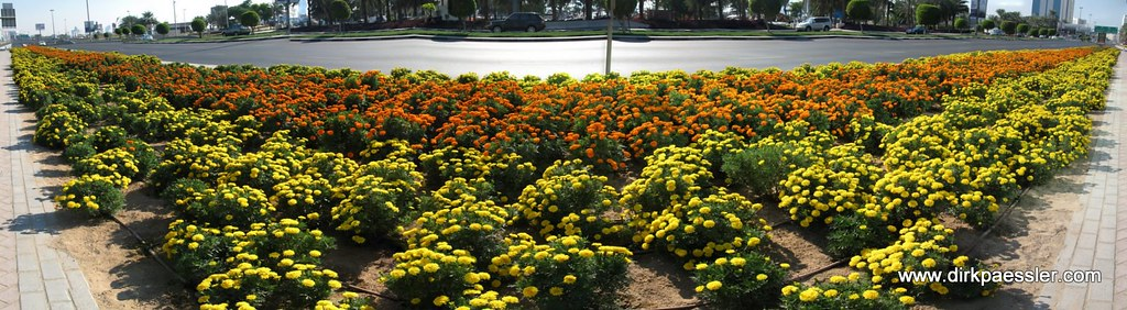 Street Side Flowers in Dubai