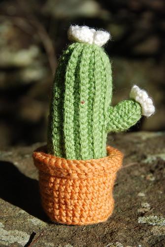 Crochet Cactus by Nadia308
