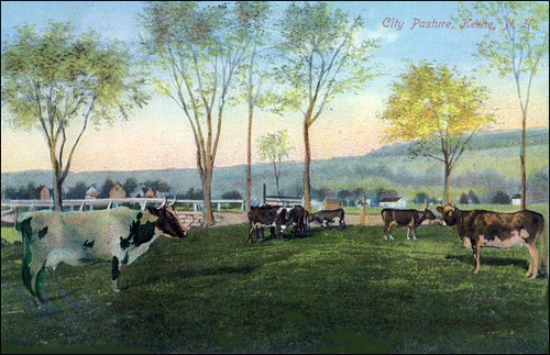 City Pasture, Keene, NH