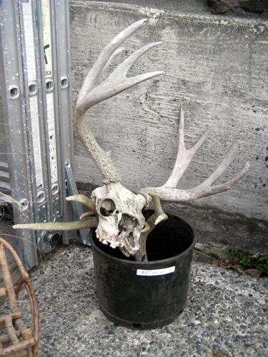 $8 Bucket of Antlers