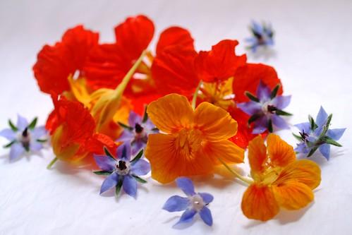 Nasturtiums and borage flowers