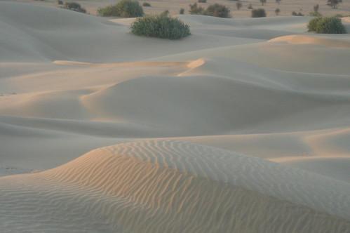 騎駱駝1-56 沙丘