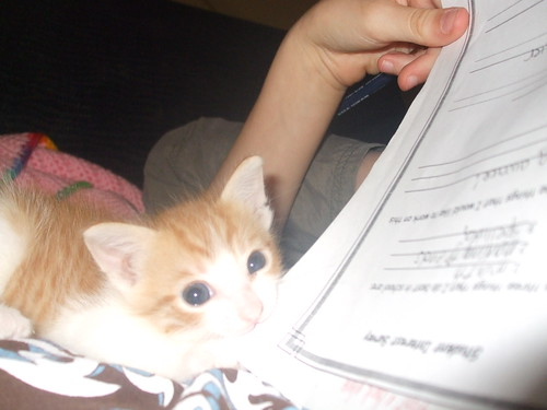 The kitten ate my homework! by you.