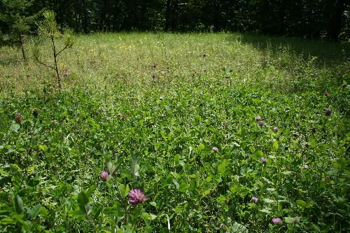 Yard full of wildflowers