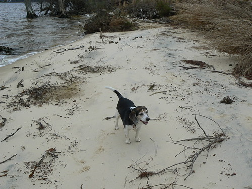 Newbold White House Recreation Trail - Henry on Sand