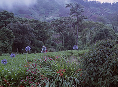 Panama Guadalupe Farm