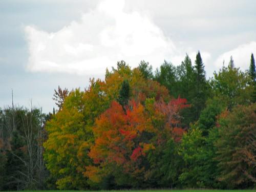 More Brilliant Fall Colors